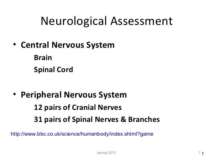 Neurological Assessment <ul><li>Central Nervous System </li></ul><ul><ul><li>Brain  </li></ul></ul><ul><ul><li>Spinal Cord...