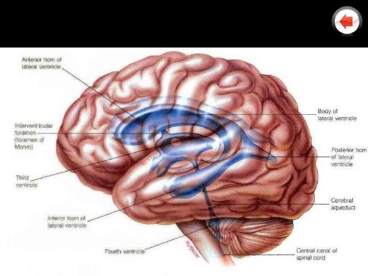 Ct Head Anatomy Choice Image - human body anatomy