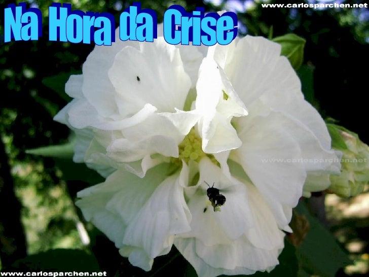Na  Hora  da  Crise