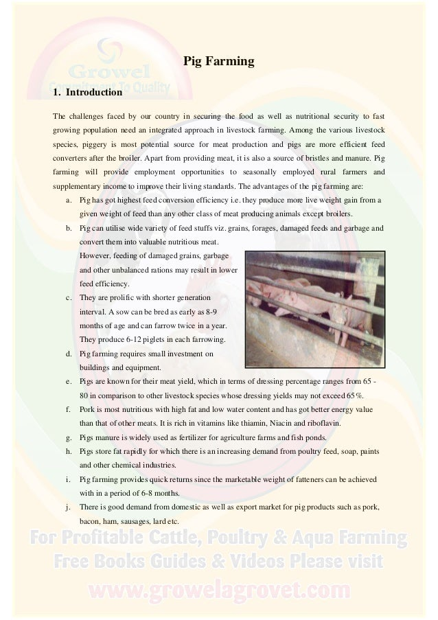 pig farming project report for bank loan  pig farming