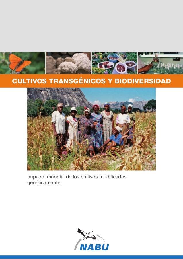 Impacto mundial de los cultivos modificados genéticamente CULTIVOS TRANSGÉNICOS y BIODIVERSIDAD