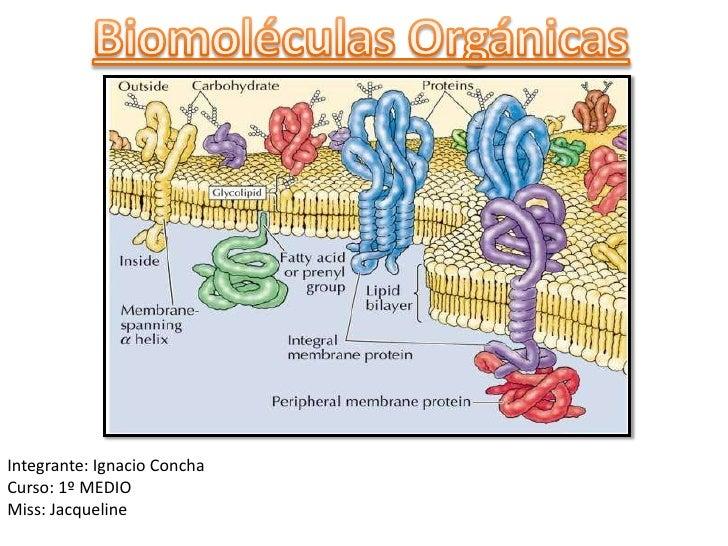 Biologia Biomoleculas Organicas