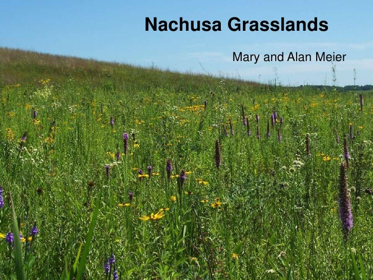 Nachusa Grasslands        Mary and Alan Meier