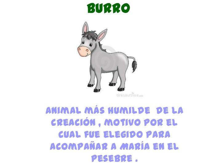 BurroAnimal más humilde de la creación , motivo por el  cual fue elegido para acompañar a María en el        pesebre .