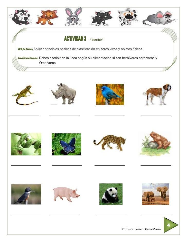 Imagenes De Animales Carnivoros Omnivoros Para Colorear Ficha