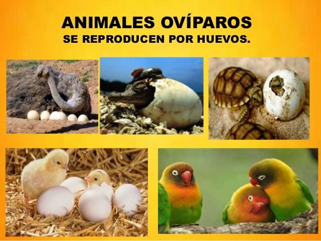 Nacimiento y crecimiento de humanos y animales - Como se aparean los elefantes ...