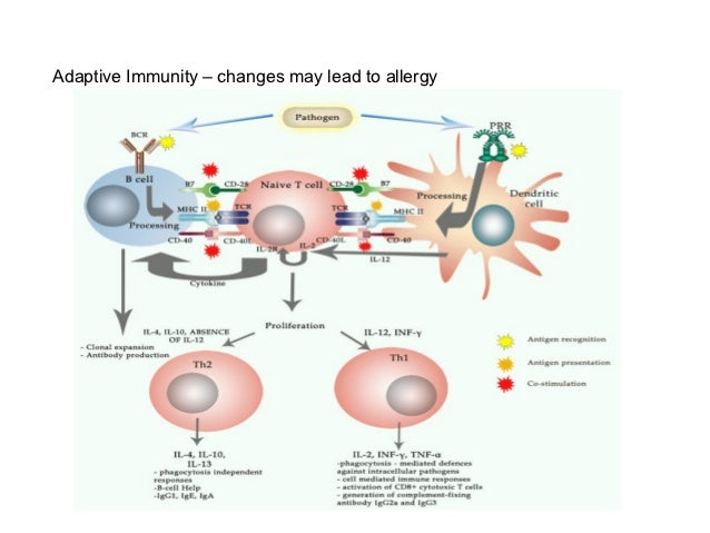 Adaptive Immunity – changes may lead to allergy
