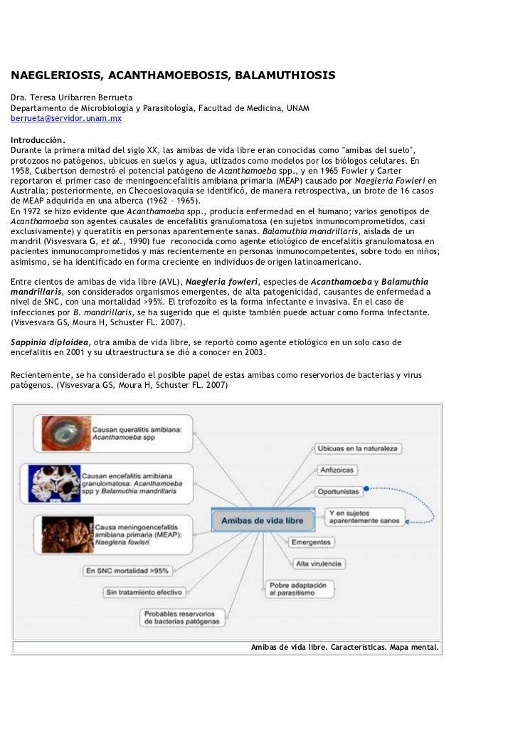 NAEGLERIOSIS, ACANTHAMOEBOSIS, BALAMUTHIOSIS Dra. Teresa Uribarren BerruetaDepartamento de Microbiología y Parasitología, ...