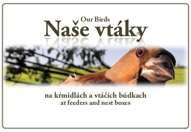 Our BirdsNaše vtákyna kŕmidlách a vtáčích búdkach    at feeders and nest boxes