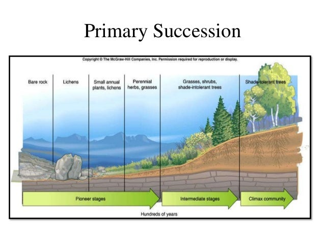 Best Ever Ppt On Ecological Succession By Nagesh