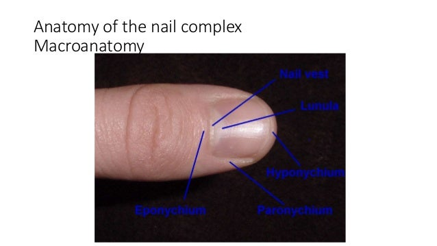 Nail Bed Repair 28 Images Nail Bed Injuries Fingertip