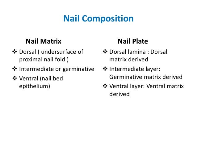 Anatomy Of Nail And Applied Aspects