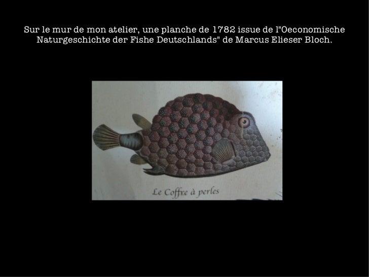 """Sur le mur de mon atelier, une planche de 1782 issue de l""""Oeconomische Naturgeschichte der Fishe Deutschlands"""" d..."""
