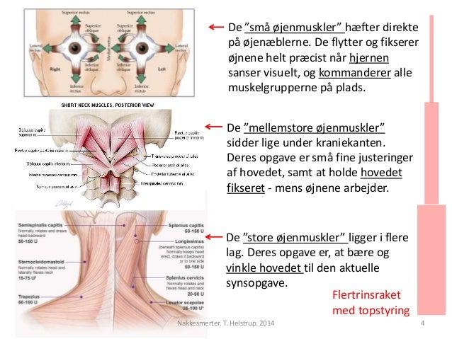 """De """"små øjenmuskler"""" hæfter direkte  på øjenæblerne. De flytter og fikserer  øjnene helt præcist når hjernen  sanser visue..."""