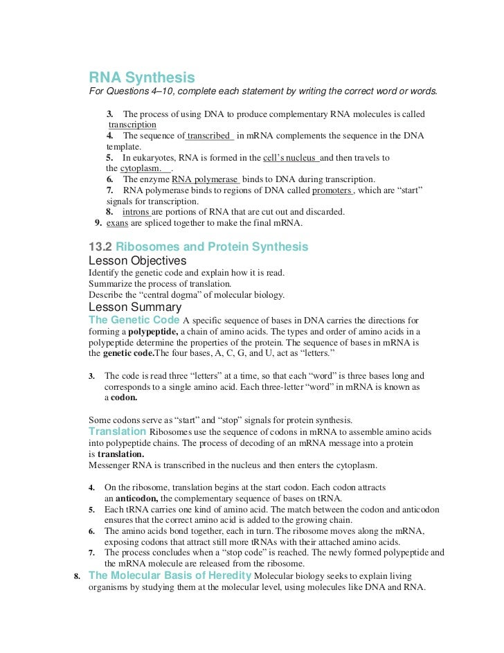 Ap biology transcription and translation essay