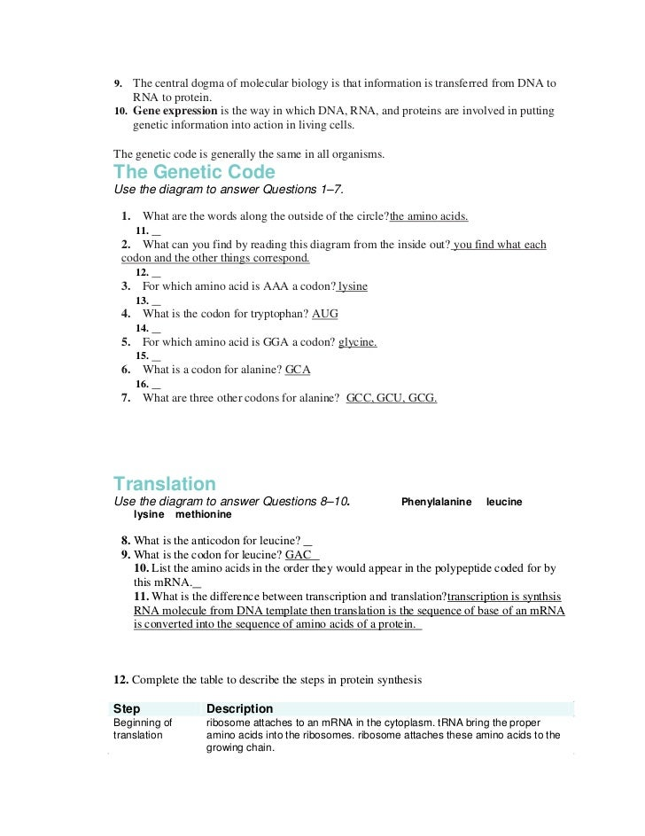 Chapter 13 packet – Transcription and Translation Worksheet Answers