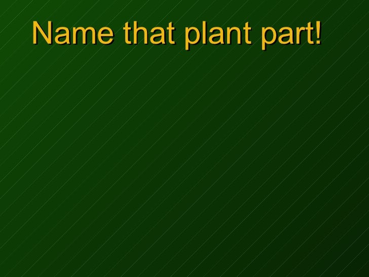Name that plant part!