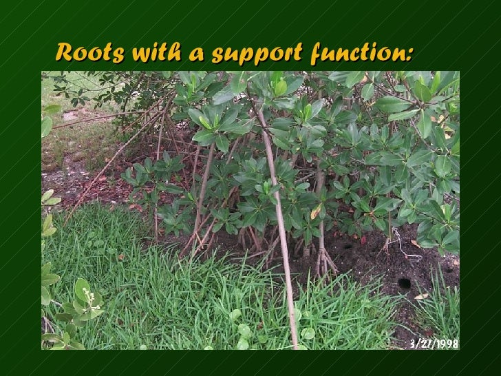 Name Root: Name That Plant Part
