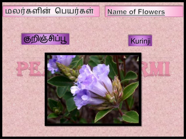 flowers name list in tamil - photo #13