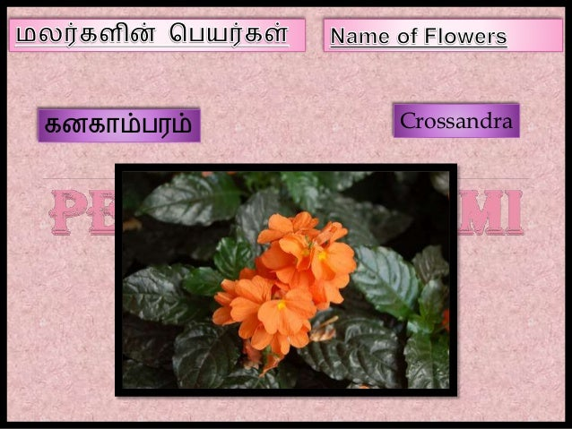 flowers name list in tamil - photo #43