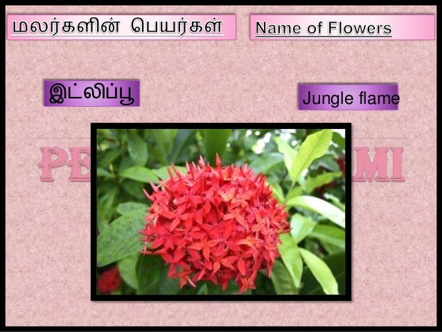 name of flowers in tamil  part iii, Natural flower