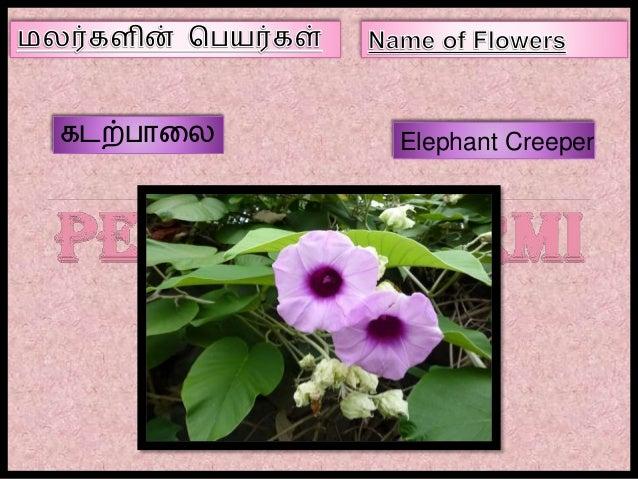 Name Of Flowers In Tamil Part Iii
