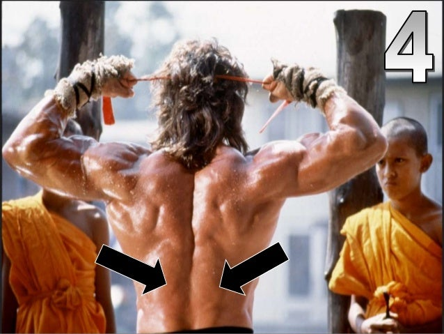 Name that Muscle on Stallone PowerPoint Quiz, Muscles