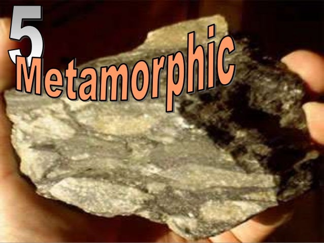 Fossils     Most    Fossils    Are Found In Igneous Rock