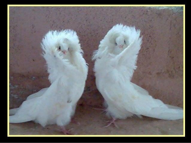 Name these birds jolies plumes et belles ailes