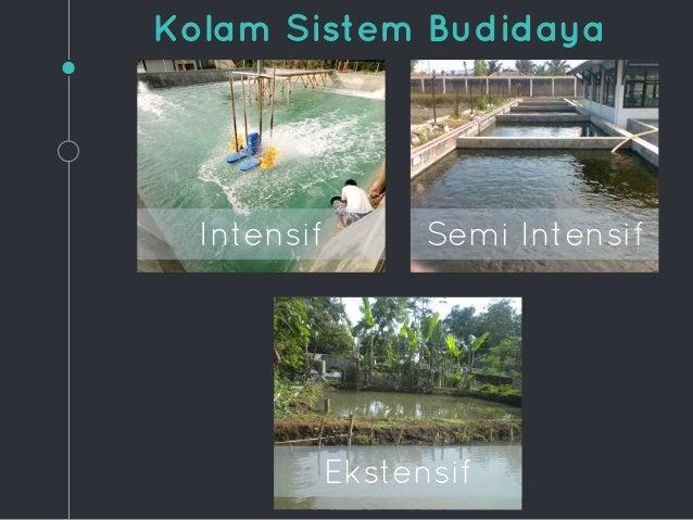 Nanda Danu Budidaya Ikan Mas