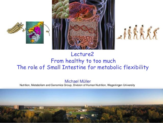 Lecture2From healthy to too muchThe role of Small Intestine for metabolic flexibilityMichael MüllerNutrition, Metabolism a...