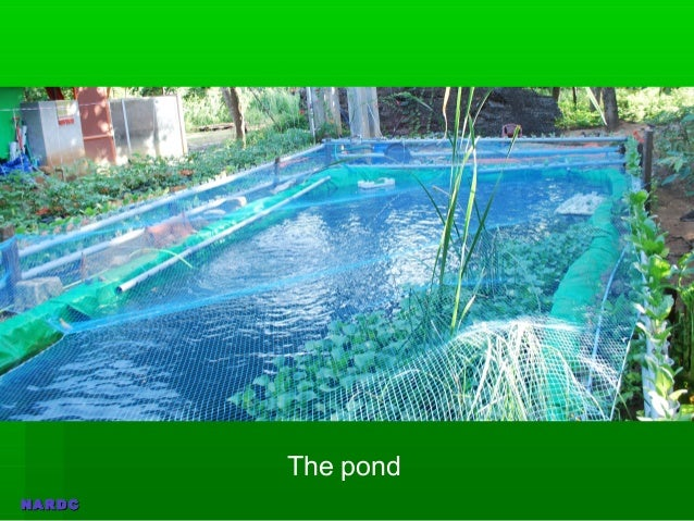aquaponics in india Get the basics right selection of the right system and few steps that can make your food growing journey simple & fun start your journey with india aquaponics.