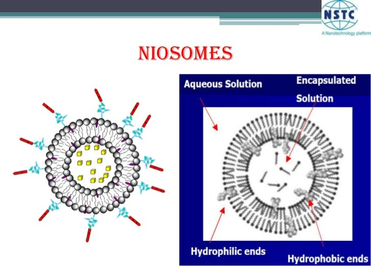 Niosomes<br />