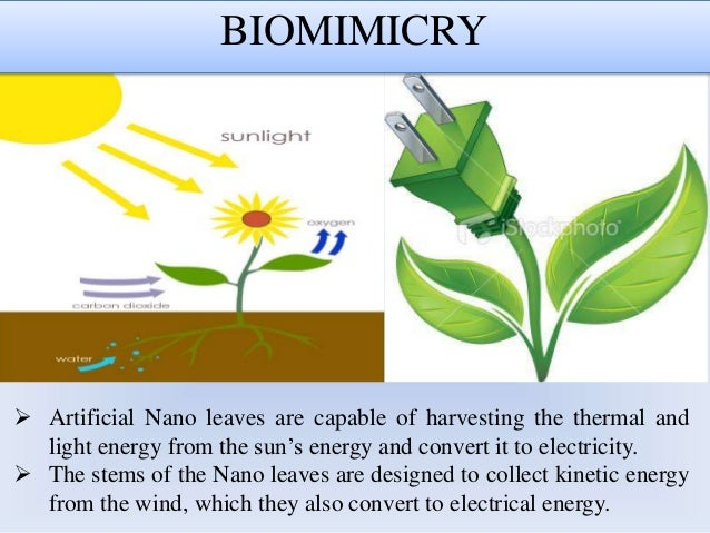 energy harvesting and nanotechnology For many people, nanotechnology belongs in the realm of science fiction researchers at the universities of bristol and essex have solved the mystery of the blue sheen on the leaves of some begonias and have found that their.