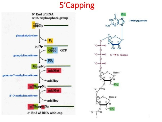 nuclear transport of steroid hormone receptors
