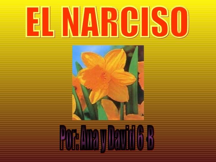 EL NARCISO Por: Ana y David 6·B