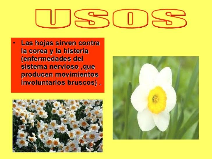 <ul><li>Las hojas sirven contra la corea y la histeria (enfermedades del sistema nervioso ,que producen movimientos involu...