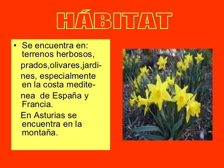 <ul><li>Se encuentra en: terrenos herbosos, </li></ul><ul><li>prados,olivares,jardi- </li></ul><ul><li>nes, especialmente ...