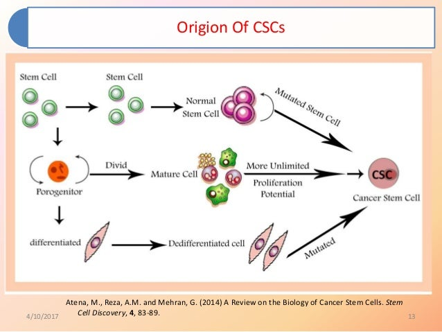 Role of cancer stem cells in cancer therapy