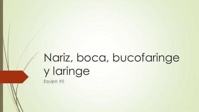 Nariz, boca, bucofaringe  y laringe  Equipo #5