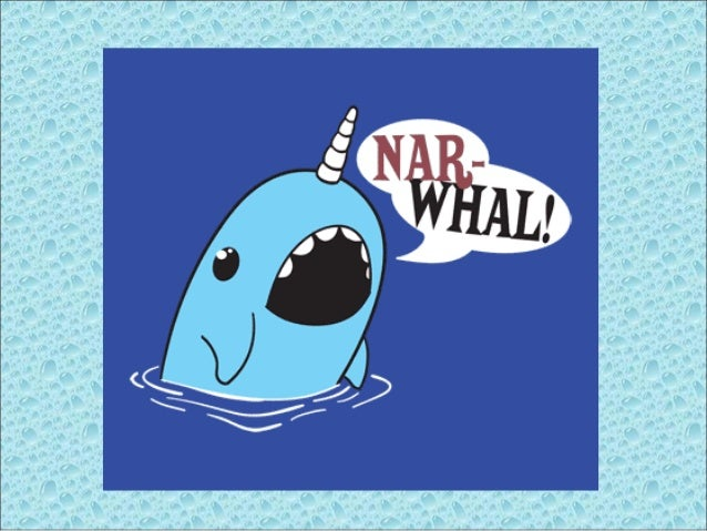 Narwhal Monodon Monoceros The Narwhal is a rarely seen Arctic whale. This social whale is known for the VERY long tooth th...