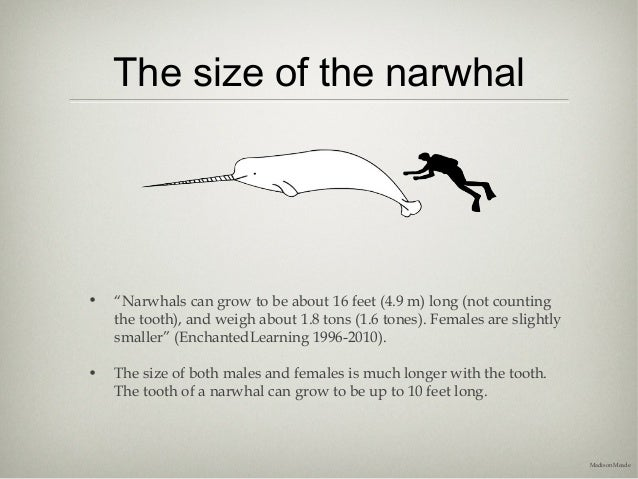 Narwhal - The Presentation