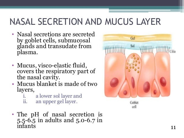 List of Synonyms and Antonyms of the Word: nasal mucus