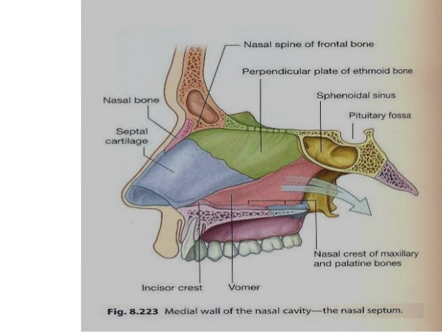 4652618 likewise 5071722 likewise Dc Revised Ears Nose Throat Mouth Part 2 moreover 7501145 also The Digestive System 522456. on serous membrane slide