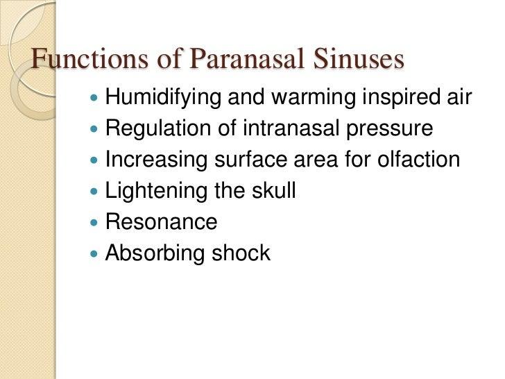 Nasal cavity and paranasal sinuses