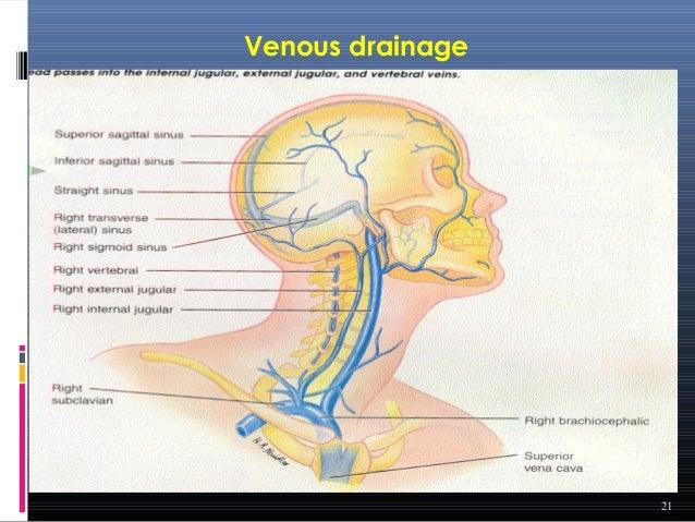 nasal drug delivery system pdf