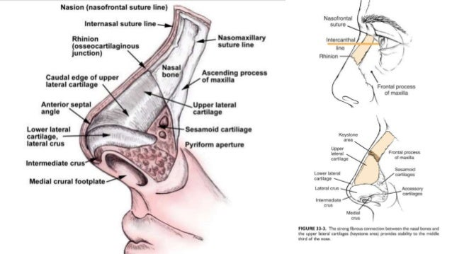 HISTORY  Any history of a fall or force directed toward the mid face  Details of the injury either assault or any RTA (m...