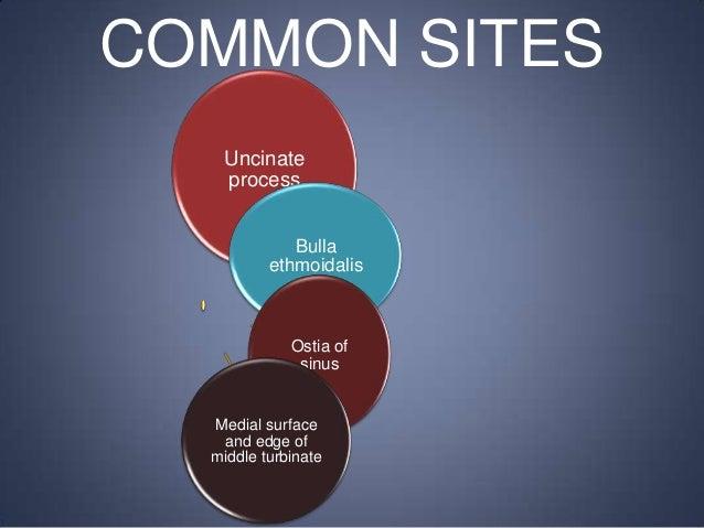 COMMON SITES Uncinate process Bulla ethmoidalis  Ostia of sinus  Medial surface and edge of middle turbinate