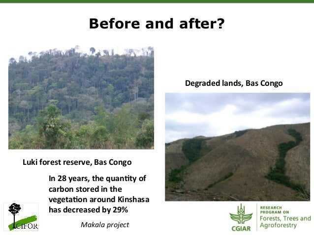 management of forest resources Sustainable forestry means managing our forests to meet the needs of the  present  it is a process of informed decision-making that takes into account  resource.