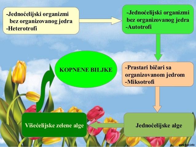 -Jednoćelijski organizmi bez organizovanog jedra -Autotrofi -Jednoćelijski organizmi bez organizovanog jedra -Heterotrofi ...